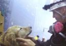 New York celebra i cani eroi di Ground Zero (e non solo)