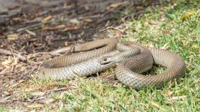 Zoo permette di dare il nome di un ex a un serpente!