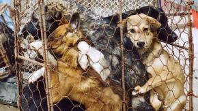 Festival di Yulin, atrocità senza fine