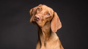 Cose straordinarie che non sai sul cane