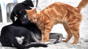 Litigare come cane e gatto: cosa c'è di vero?
