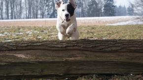 Scoprite quanto è agile il vostro cane