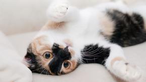 Gatti che sballano con la valeriana