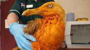 Veterinari credono di aver trovato un uccello esotico raro ma in realtà era coperto di curry!