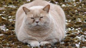 Quando il gatto sale sulla bilancia