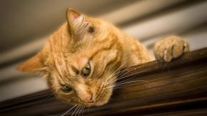 Il gatto: 10.000 anni di misteri