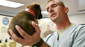 Il veterinario di fiducia: come sceglierlo?