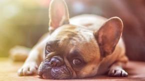 Cani depressi e come aiutarli