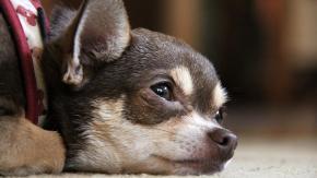 Il cane non mangia più: perché?