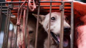 Yulin: torna l'incubo