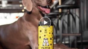 Nasce in Italia la birra per cani