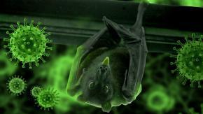 Piano per infettare i pipistrelli con il Covid