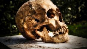 Collezionisti di ossa scoperti a Milano