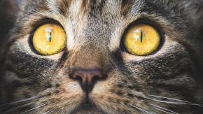 Cose inquietanti (e inspiegabili) che fa il gatto