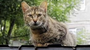 Gatti equilibristi e gatti… no!