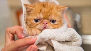 Si può lavare il gatto?