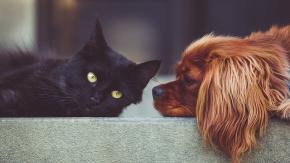 Pulire casa senza avvelenare cane o gatto