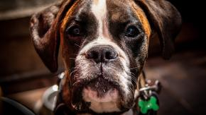 Cani con l'acne: che fare?