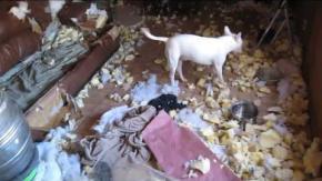 I cani che distruggono casa