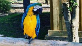 Pappagalli imprecano contro i visitatori, lo zoo li sposta in isolamento