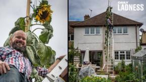 """""""Voglio un girasole alto come la casa"""": papà accontenta il figlio con una pianta alta sei metri"""