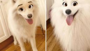 Con il nuovo filtro di snapchat il tuo cane può trasformarsi in un personaggio Disney