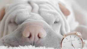 Cani che non dormono