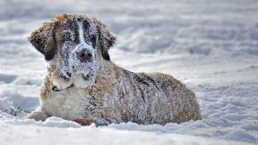 Pazzia da neve