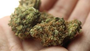 A Milano arriva la marijuana di cittadinanza