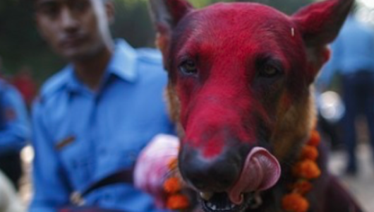 C'è chi i cani li abbandona, ma c'è anche chi dedica loro una cerimonia speciale