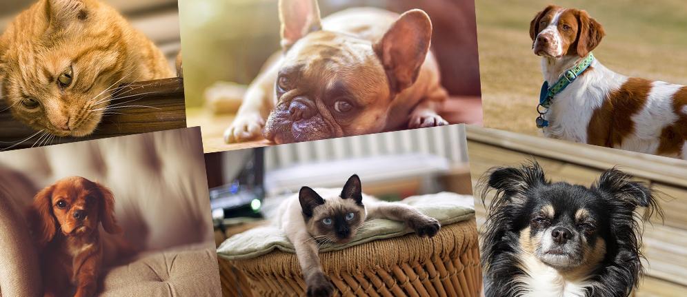 Pelozoo - Il mondo dedicato ai nostri amici animali!